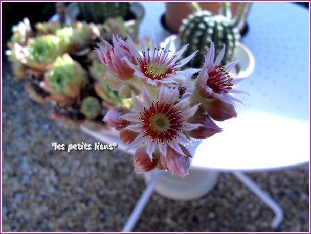 belle-fleur2.jpg
