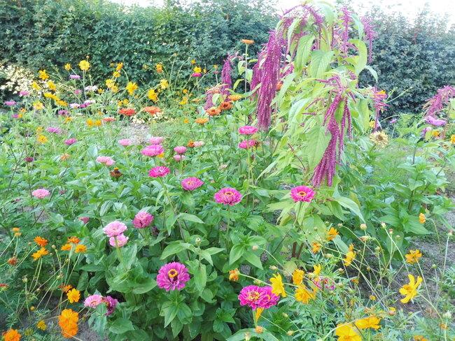 Le jardin d'Elvy