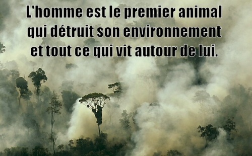 Déforestation !!