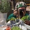 jardin du chat vert