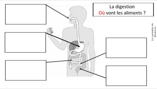 Carte mentale (organigramme) : la digestion