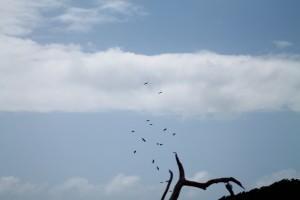 oiseaux 043