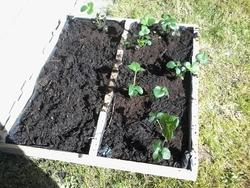 Bac pour plantation
