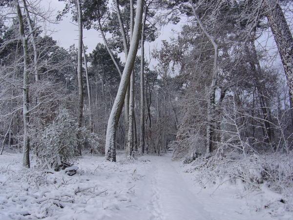 jour-de-neige--25--01--07-018.jpg
