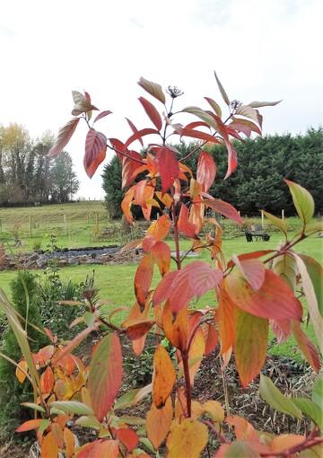 Couleurs d'automne  dans le nouveau jardin