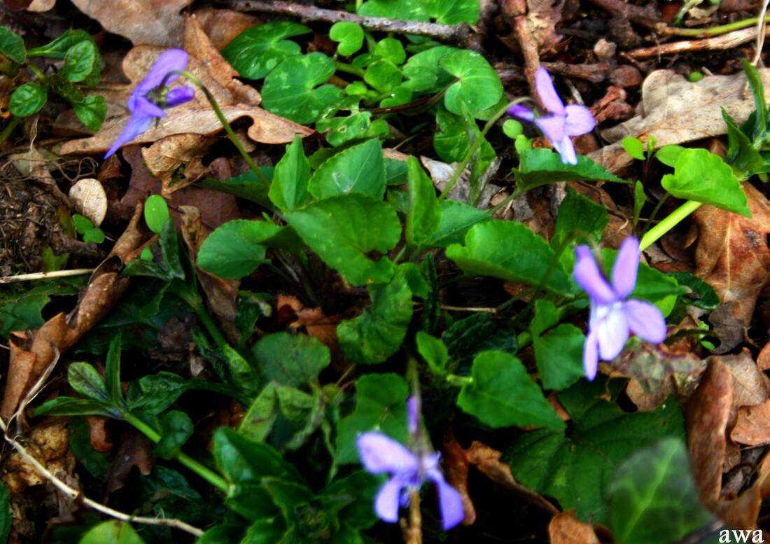 Nature sauvage au printemps