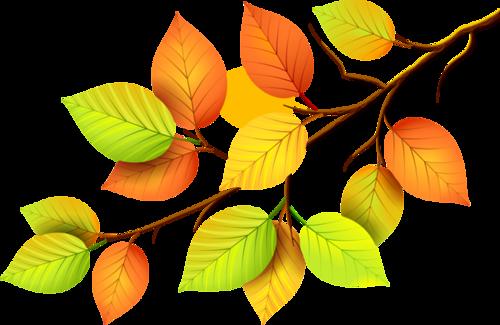 Branchage  d'automne etc