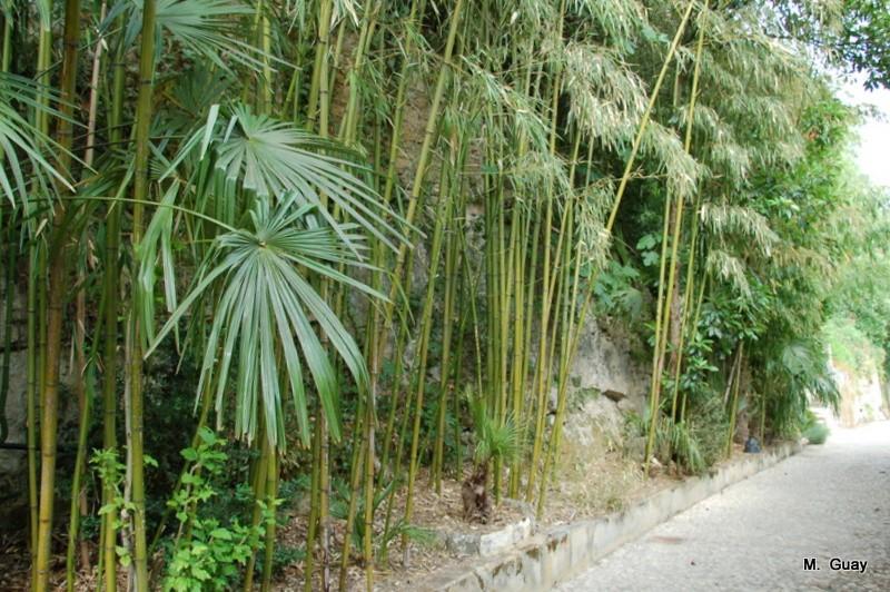 palmiers-2620.JPG