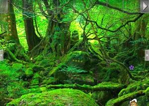 Jouer à Wildwood forest escape