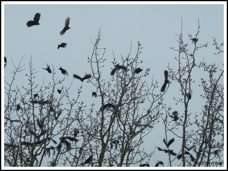 Petits oiseaux manifestant pour du beau temps. (Mon Instant T)