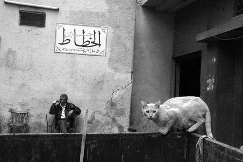 08 - Des chats dans les rues...