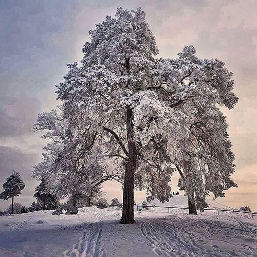 arbres magiques(2)
