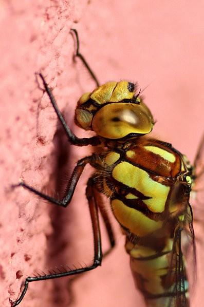 macros-insectes 3764