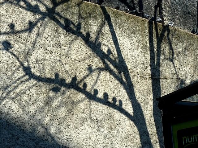 Pigeons de Metz 1 Marc de Metz 11 04 2013