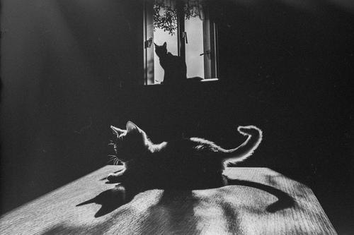 04 - Des chats à la fenêtre et des contrastes
