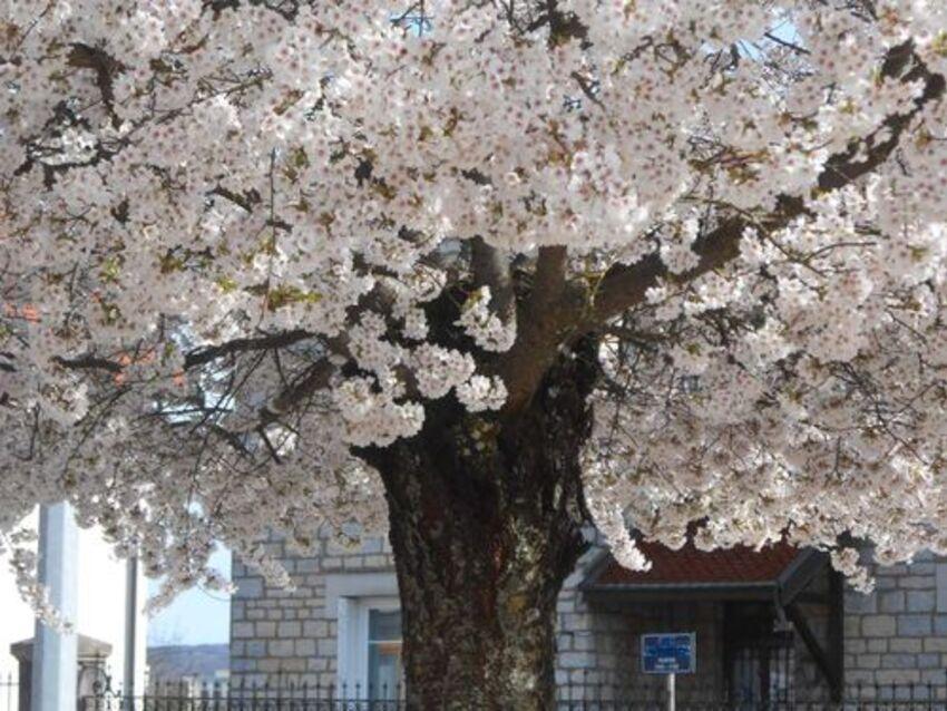 plus que huit jours de froid avant le printemps