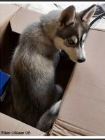 Mayka (3,5 mois)