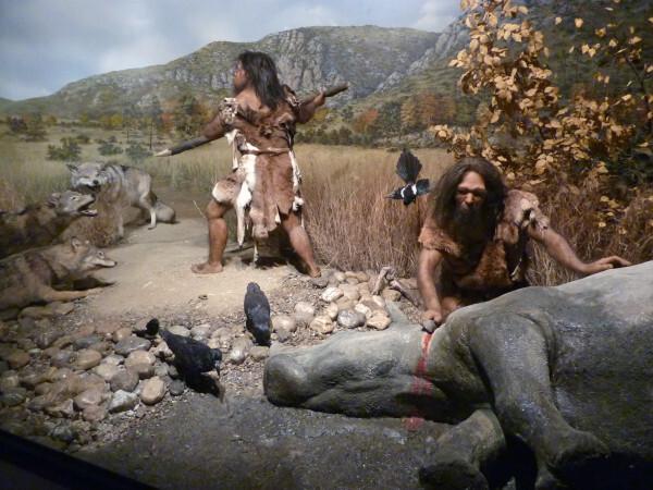 Tautavel - La chasse aux loups et le dépecage du rhinocér