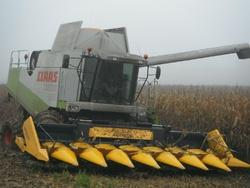 du maïs au maïs