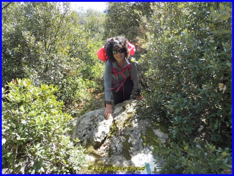 Forêt des Morières, le bau pointu