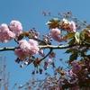 6 AVRIL 2011_6_1.JPG