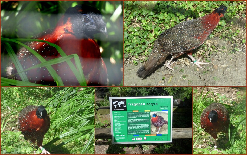 Promenade au zoo d'Amiens