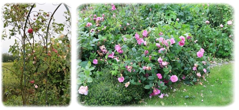 Le jardin a bien morflé :o(