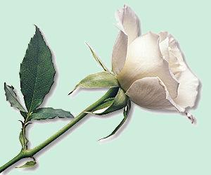 Spéciale fleures