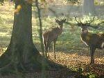 Randonnée en Forêt de Roumare : attention changement de date !