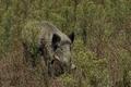 Grands mammifères en milieu naturel ou réserve