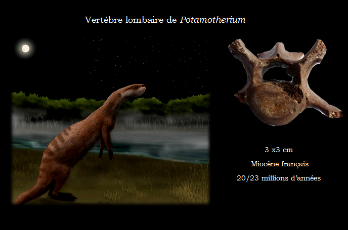 Potamotherium