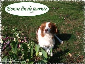 BONNE FIN DE JOURNEE EMY 916X687