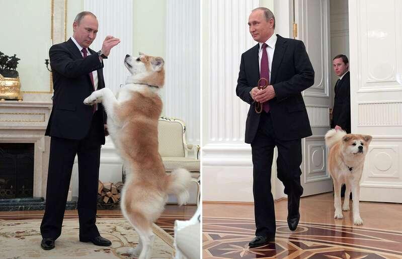 Poutine aime les animaux
