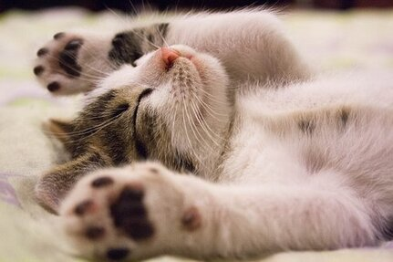 Chaton, Cat, Petit Chat, Kitty, Mignon