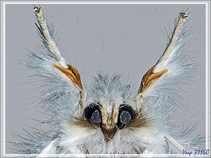Devinette : à quel monstre appartient cette tête poilue avec ces oreilles pointues ?