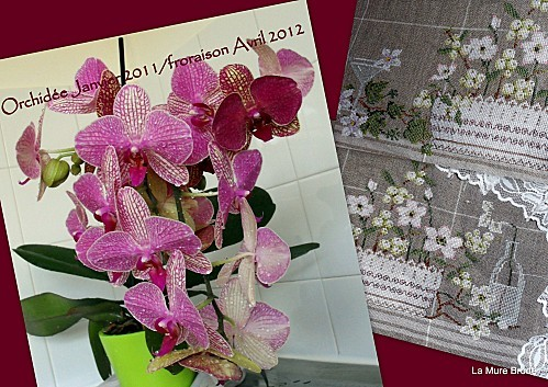 1-2012-04-16-orchidees---nappe-fleurs-blanches.jpg