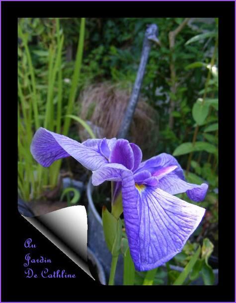 Jardiner avec la lune du 1er au 10 Juillet