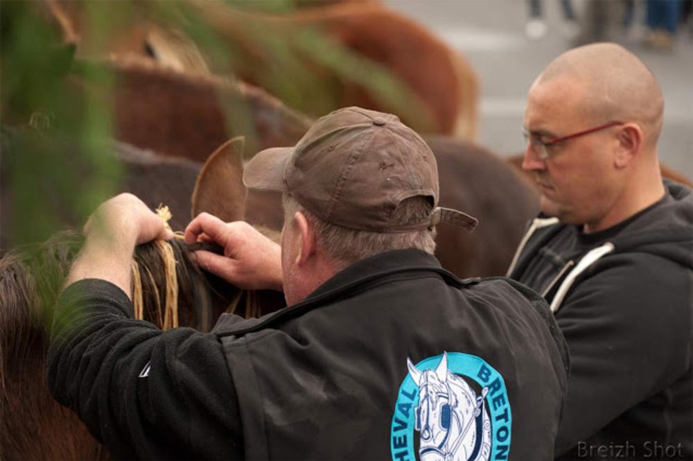 cheval breton coupe tressage de crinières : Les gars de l'Odet