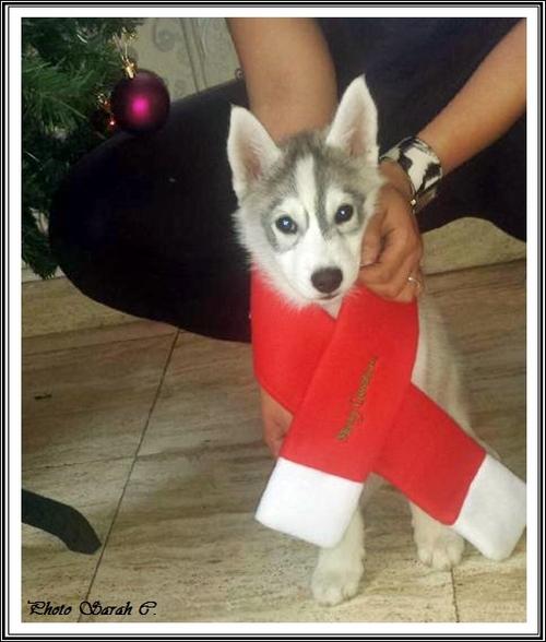 Iankee Noël