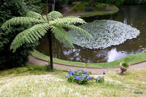 Açores (île St Michel): dans un parc