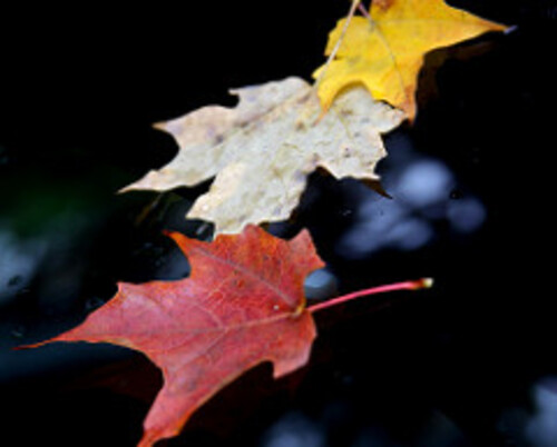 Profiter simplement de l'automne en famille