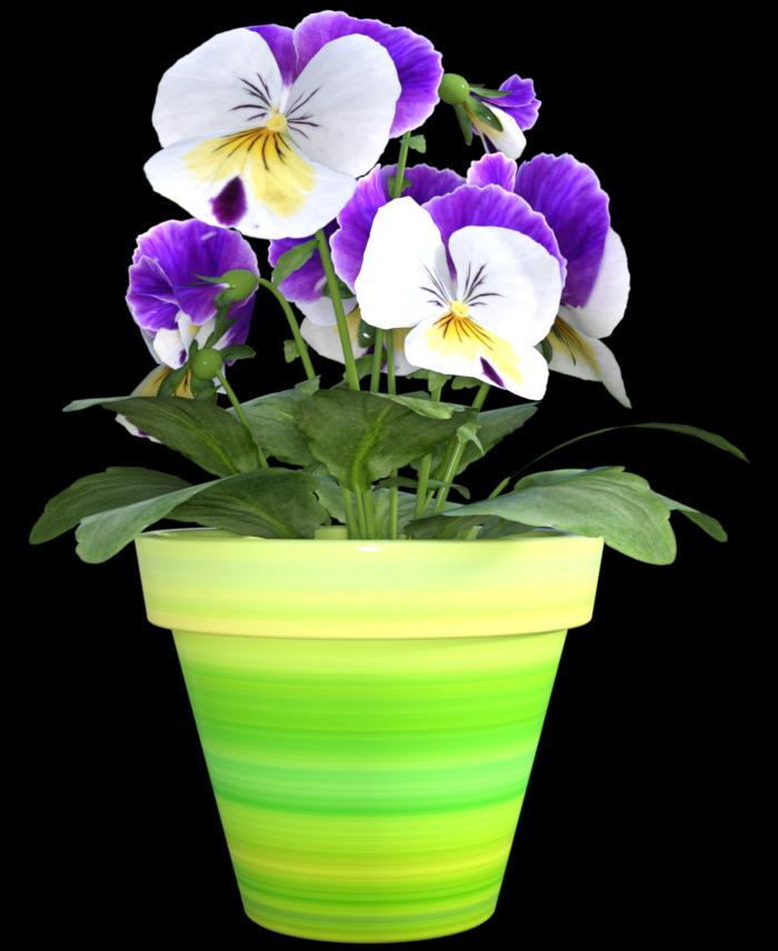 """Image de fleur """"pansées"""" (tube-render)"""