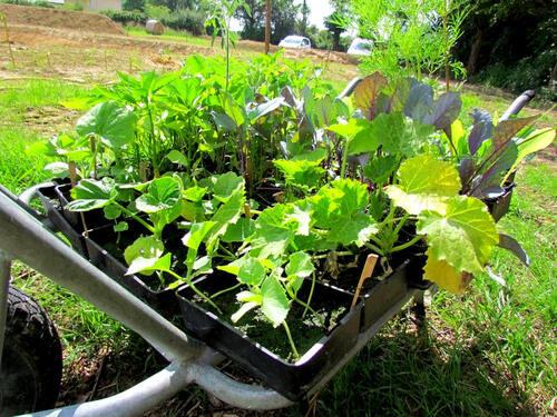 Plants prêt à planter