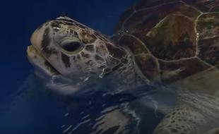 La tortue marine