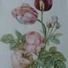 Roses et tulipes