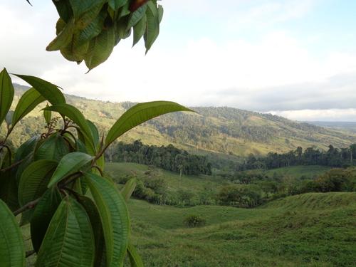 Paysage pres du Cerro Pittier