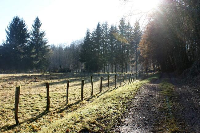 Le Pays des mille Etangs - Haute Saône - prairie - conifères - soleil