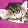 chatons-autres-animaux-autres-chats-france-4549219013-965147.jpg