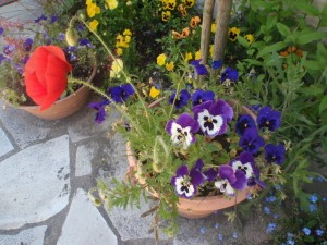 2013-05-21et-14-Berangere-chez-ALise-et-le-jardi-copie-10.jpg