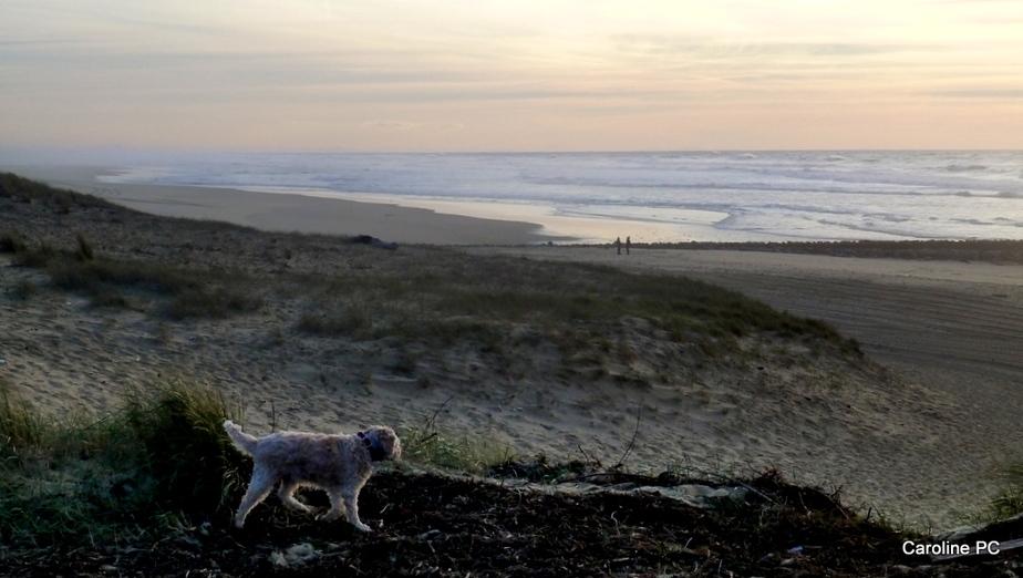 Promenade à Contis-plage